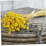 NaiCasy 50pcs / Set Flor Artificial Decoración Natural de Flores secas Ramo Decorativo de Flores secadas Fotografía Partido de la decoración Boda del florero En Puntales Amarillo