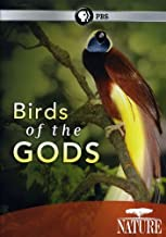 nature birds of the gods