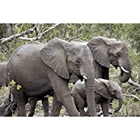 ジグソーパズル象のシリーズ大人の子供たちはリラックスして知的ゲームを集中しています。家族の必須おもちゃ500-6000個 0126 (Color : No partition, Size : 1000 pieces)