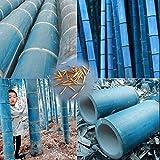 SummerRio 100 unids Colorido bambú Semillas Bonsai plantación Home Garden decoración Semillas