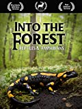 Into the Forest: Reptiles & Amphibians