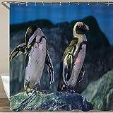 VORMOR Cortinas Ducha,Lindos pingüinos en la Roca. Animales de Acuario,Cortina de Ducha Impermeable, Cortina de Ducha 180x180cm