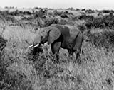 Elephant Uganda Poster Drucken (60,96 x 91,44 cm)