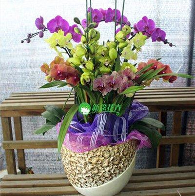 Fleur exotique Orchidée Graines Cattleya Multicolor Papillon Orchidee Bonsai Monoflord Mini jardin plante facile à cultiver 200 pcs/sac 13