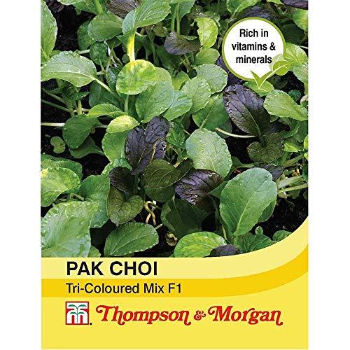 HOCH KEIMUNG Seeds Nicht NUR Pflanzen: Thompson & Morgan - Pak Choi (Kohl) Tricoed Mix F1 125 Seed