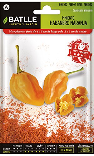 Semences Battle Piment Habanero Orange