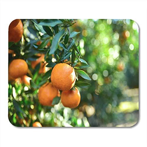Mauspads Grüne Landwirtschaft Reife saftige süße Orange Mandarinen auf Baum Mauspad für Notebooks, Desktop-Computer Matten Büromaterial