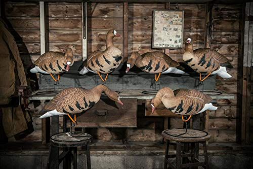 HARD CORE DECOYS Rugged Series Full Body Specklebelly Goose Hunting Decoys with TruMotion 2.0 Bases | Touchdown Pack of 6 Specklebelly Goose Decoys | Includes 6 TruMotion 2.0 Bases