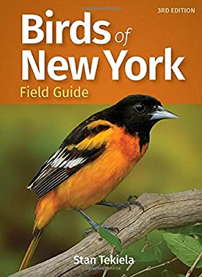 Birds of New York Field Guide (Bird Identification Guides) by Adventure Publications