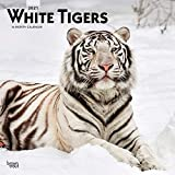 White Tigers 2021 12 x 12 Inch Monthly Square Wall Calendar, Wildlife Zoo Animals