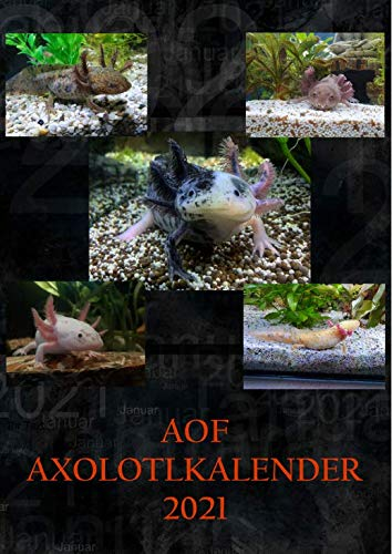 Aquaterratec Axolotl Kalender 2021