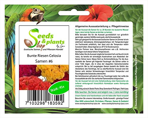 Stk - 45x Riesen Celosia cristata Pyramidalis 4 Farben Pflanzen - Samen #6 - Seeds Plants Shop Samenbank Pfullingen Patrik Ipsa