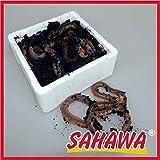 SAHAWA Lebendfutter kanadische Tauwürmer lebend 10 Stück in der Styropordose + Geschenk gratis,...
