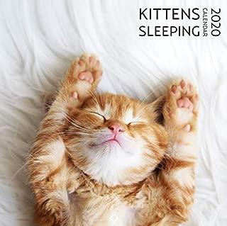 artico Cat Calendar 2020 | Kitten Square Wall Calendar (12 x 12) | Yearly Cat Lover's Calendar | Monthly Cute Calendar