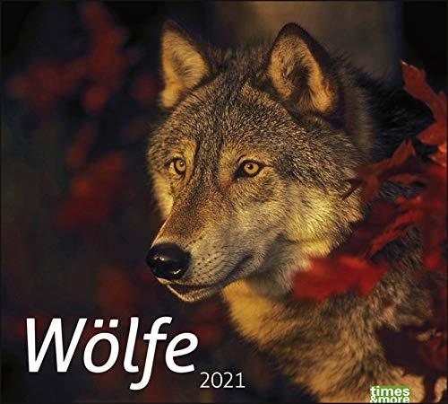 times&more Wölfe Bildkalender Kalender 2021