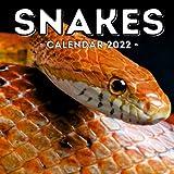 Snakes Calendar 2022: 16-Month Calendar, Cute Gift Idea For Snake Lovers Women & Men