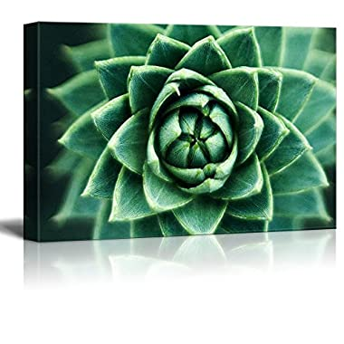 wall26 Canvas Wall Art - Closeup of a Green Succulent Plant - Giclee Print Gallery Wrap Modern Home Decor Ready to Hang - 24  x 36