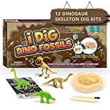 Dr. Daz Dinosaurier Skelette Ausgrabungsset für Kinder Nachtleuchtender Dinos