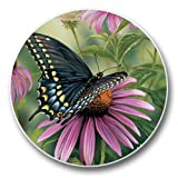 Black Swallowtail - Auto Coaster