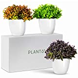 Plants+ Artificial Fake Faux Indoor House Desk Office Plant for Decoration - Plastic Lifelike Flower with White Pot, Outdoor Decor Topiary Greenery, Set of 3, Spring Bloom