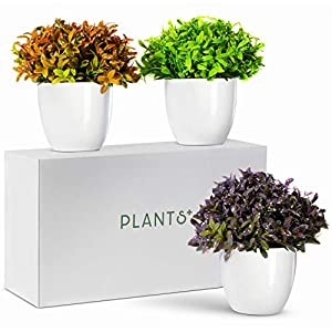 Plants+ Artificial Fake Faux Indoor House Desk Office Plant for Decoration – Plastic Lifelike Flower with White Pot, Outdoor Decor Topiary Greenery, Set of 3, Spring Bloom