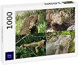 Lais Puzzle Iguana di Collage 1000 Pezzi