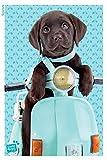 1art1 Chiens Poster - Chiot Labrador Mignon sur Un Scooter (91 x 61 cm)