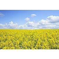 木製のジグソーパズル青い空の下で黄色い花の海の海の挑戦的で家族の友好的な楽しい楽しい楽しい楽しい楽しい屋内活動500/1000/2000/3000/4000/5000/6000/6000/6000/5000 0121 (Color : No partition, Size : 3000 pieces)