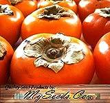 5 Semillas - Semillas japoneses caqui fruta de árbol - Diospyros kaki