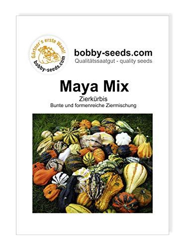 Maya Mix Zierkürbis von Bobby-Seeds, Portion