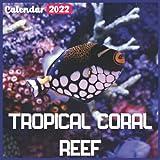 Tropical Coral Reef Calendar 2022: Official Fishes Calendar 2022, 18 Month Photo of Tropical Coral Reef calendar 2022, Mini Calendar