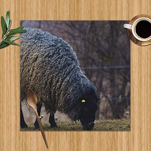 xiaolang Gotland Sheep on Meadow Typical Swedish Animal Placemats Set of 6 for Dining Table Washable Placemat Non-Slip Heat Resistant Kitchen Table Mats Easy to Clean