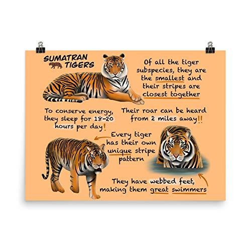 TammieLove Póster educativo de los tigres de Sumatra para niños y profesores de Sumatra Tigre Letrero de metal para decoración de pared de 30,5 x 40,6 cm