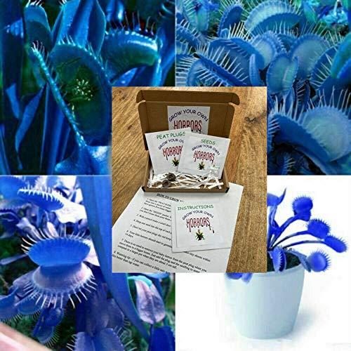 10 pièces bleu Graine exotique des plantes insectivores Succulentes Dionaea Bonsai Seed Venus Fly Trap Plantes Carnivores facile grossissement