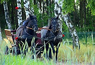Photography Poster - Team, Horses, Chaise, Animals, Trip, 24