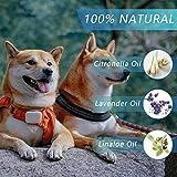 IMG-2 collare antipulci cane 100 naturale