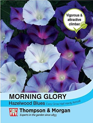 Thompson & ‿Morgan – Fleur – Morning Glory Hazelwood Blues – 35 graines