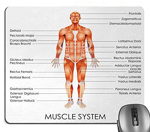 Knseva - Alfombrilla de ratón, diseño de anatomía humana, diagrama del sistema muscular del cuerpo del hombre Características biológicas Heath Rectángulo Mouse Pads