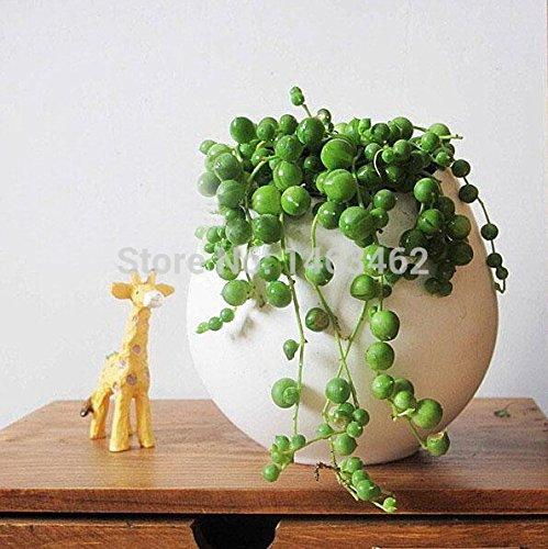 Lot de 100 mini plantes décoratives pour bureau
