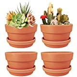 4 Pack 6 Inch Terracotta Shallow Succulent Pot - Terra Cotta Clay Pots with Saucer, Cacuts Terra-Cotta Indoor and Outdoor Planters with Drainage Hole (6 inches)