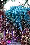 seedsown . 100 Piezas de Escalada buganvillas con Semilla Semillas Balcón Mezcla Lista para jardín de Flores en Bonsai floríferas Hardy Planta del árbol de Semillas: 9