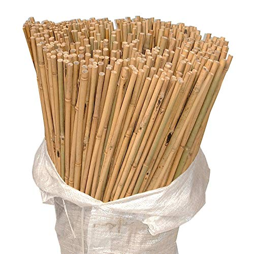 Bamboo Garden Stakes 6FT & 7FT Gardening Strong Plant Support Raised Beds & Support Structure Bamboo Canes (10, 6FT)