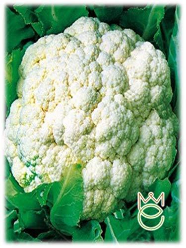 Bola de nieve Coliflor Brassica oleracea botrytis Semillas Semillas Hortalizas Huerto