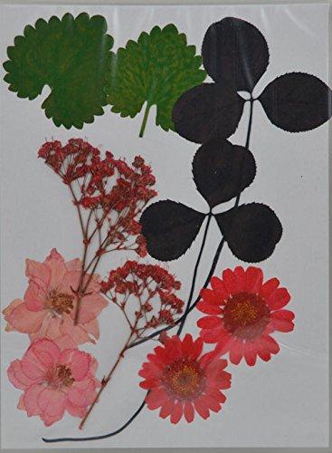 handi-kafu Mixed Daisy Larkspur respiro del bambino reale premuto fiori secchi