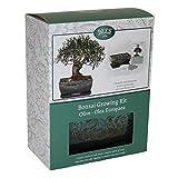 Bonsai Tree Grow Your Own Kit de regalo de olivo tradicional esmaltado