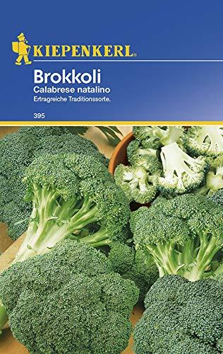 Gemüsesamen - Brokkoli Calabrese natalino von Kiepenkerl