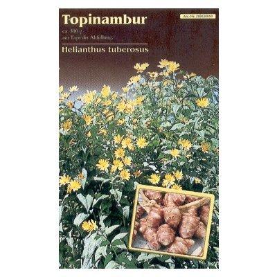 Topinambur (Jerusalem-Artischocke, Erdbirne)