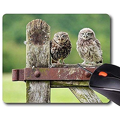 muismatten, grappige muismatten Office muismat vogels uilen bestellen ondersteuning klaar laptop muismatten comfortabel