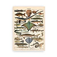 レトロ魚チャートポスターヴィンテージ海上生活キャンバス絵画インテリア子供教育壁アートパネル写真生物学科学版画モダン子供寝室装飾画40x55cmいいえフレーム