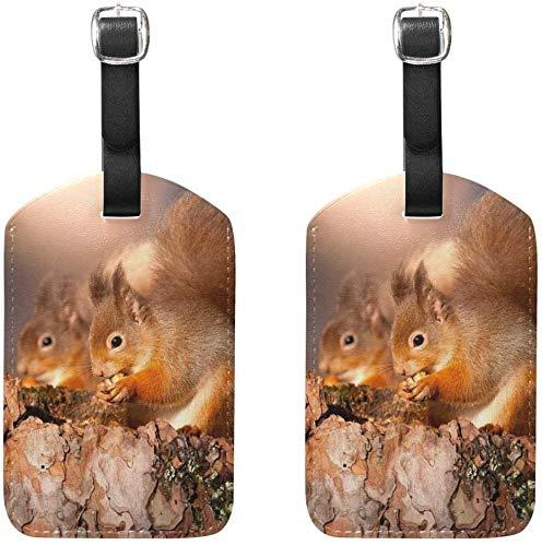 Gepäckanhänger Eichhörnchen Suche Lebensmittel Damen Gepäckanhänger Inhaber Flugzeug Reisezubehör 2er-Set